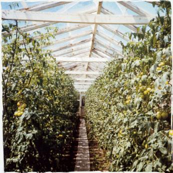 orchard-image