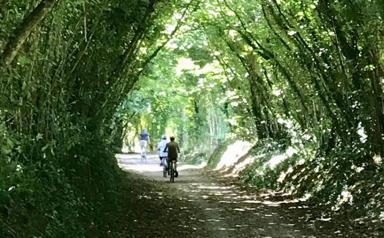 Cycle or Walk the Camel Trail